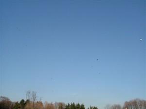 正月の青空