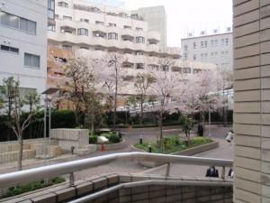入学式には桜